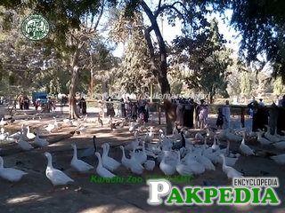 Ducks in Karachi Zoo