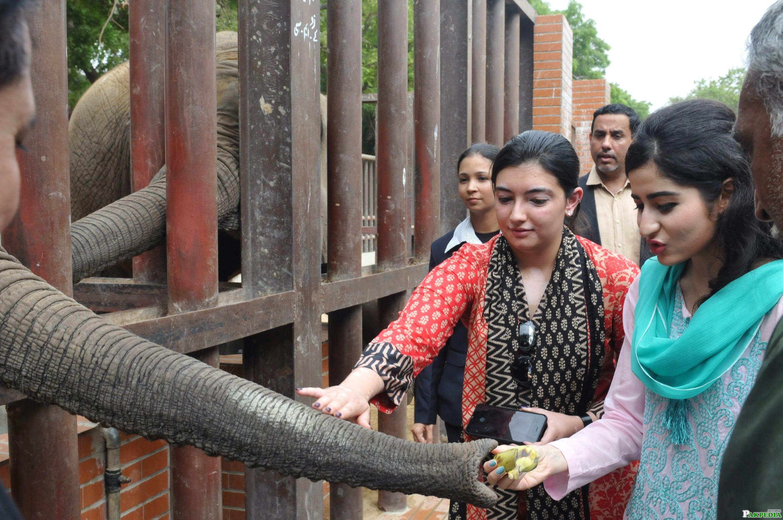 Aseefa Bhutto Zardari visits Karachi Zoo
