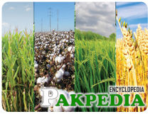Fatima Fertilizer Company Limited