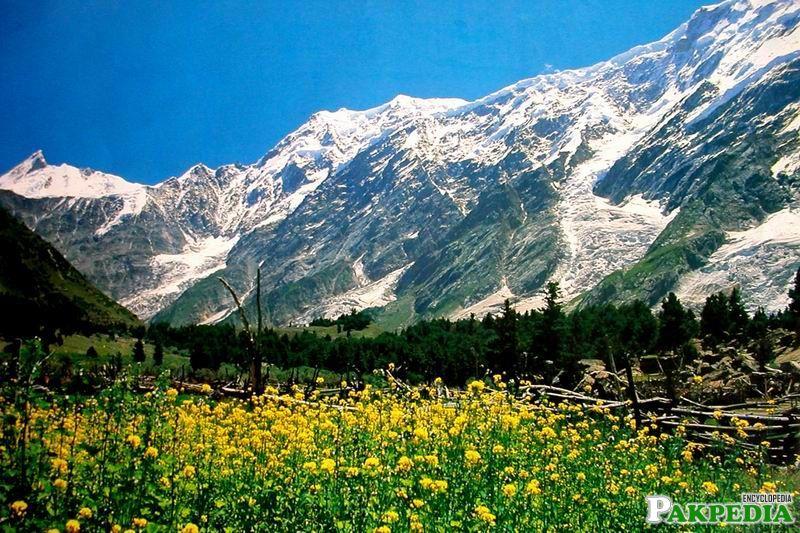 Naltar Valley Beautiful