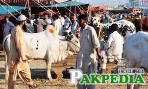 Preparations for Eid ul Adha intensify nationwide