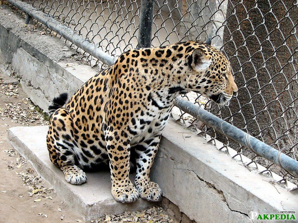 Ayubia Wildlife