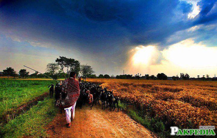Punjab Pakisatn