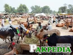 Large number of sacrificial animals seen in markeet ahead of Eid-ul-Azha