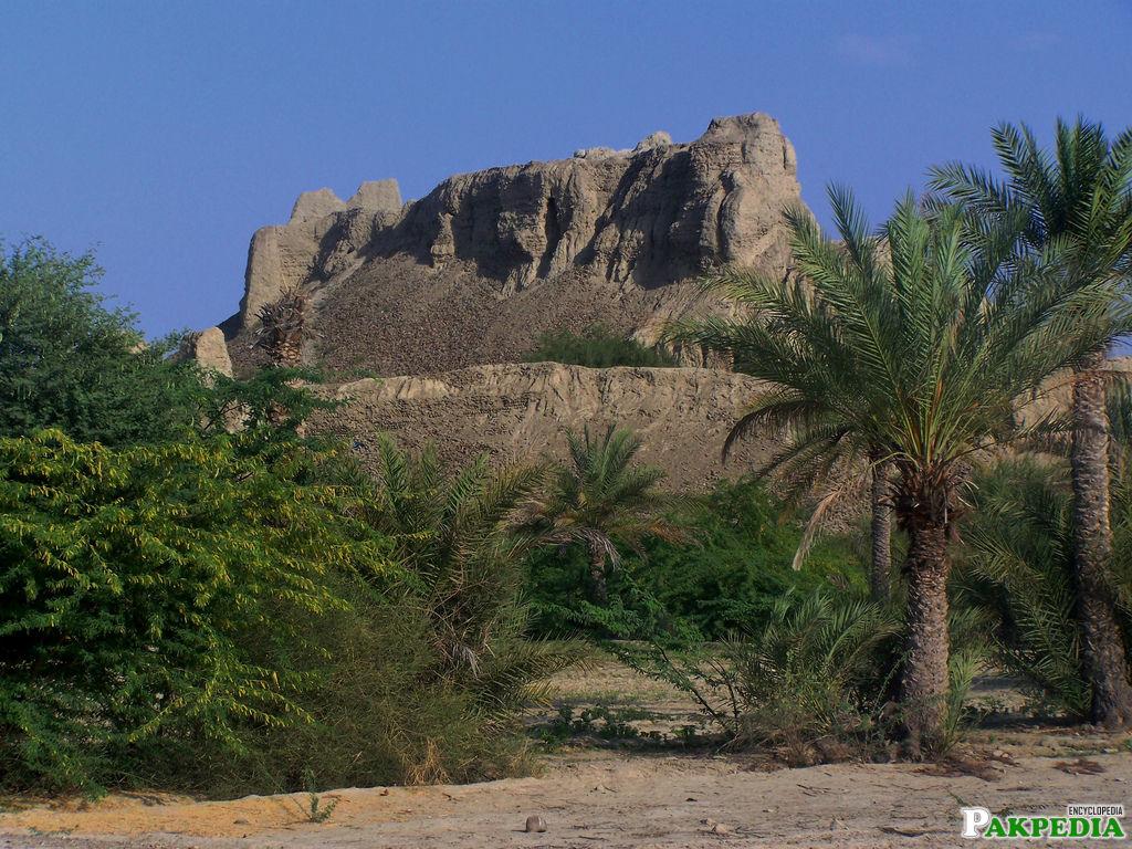 Turbat Nice Image