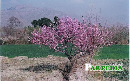 The beauty of Kurram Agency