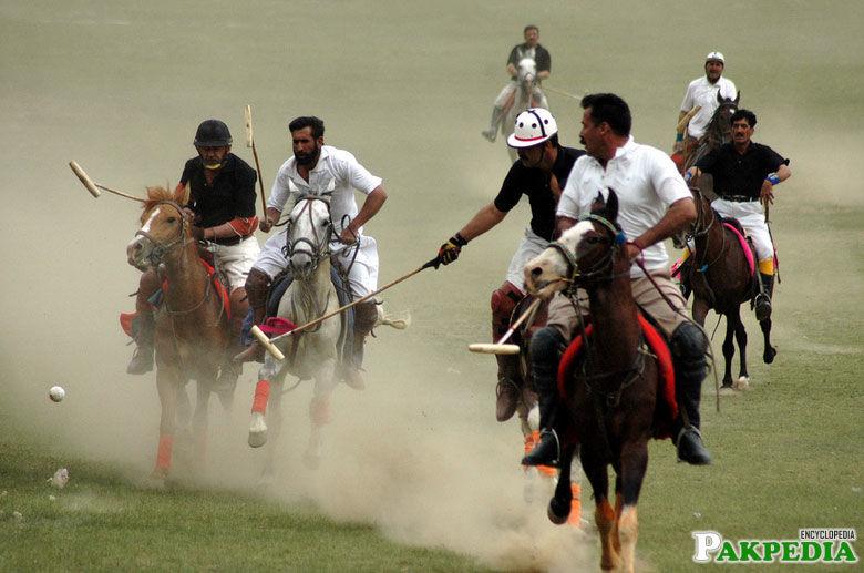 Polo Sports