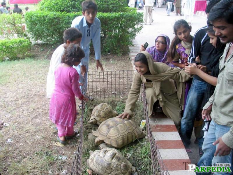 People attend the last day of 3-day festival at Karachi Zoo