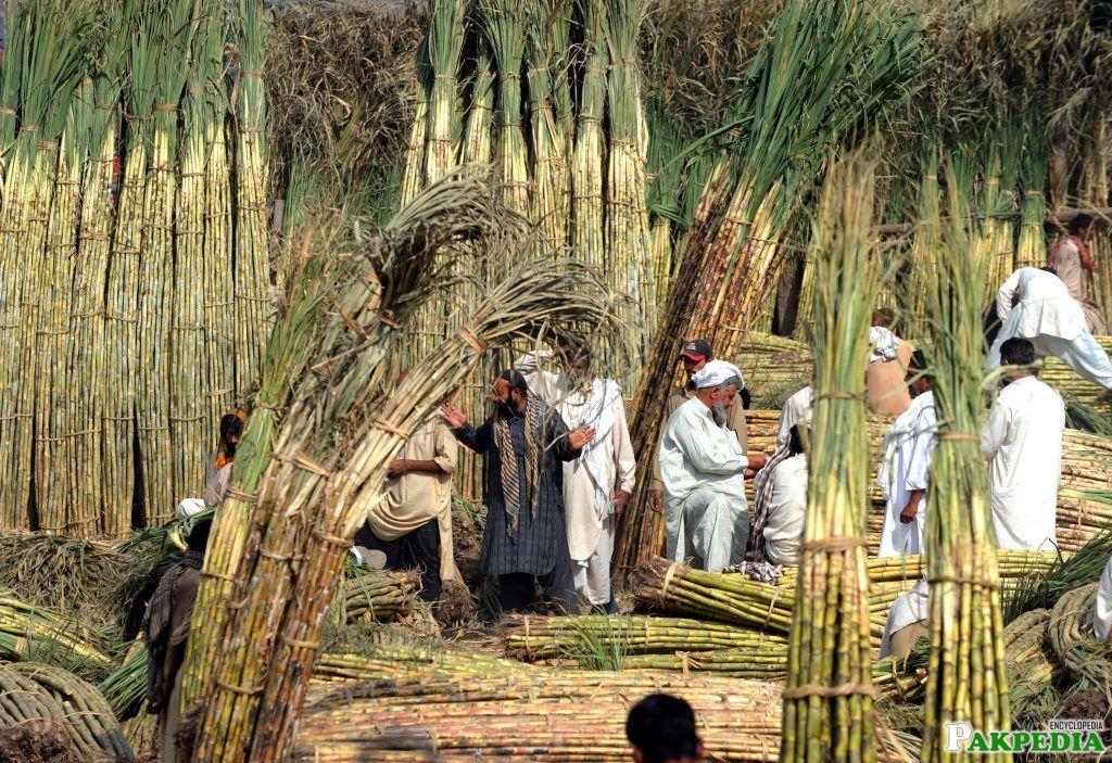 Sugar Al Noor-->[:img:Al_noor Sugar Mills Limited