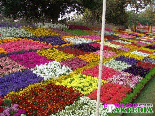 Garden in multan cantt