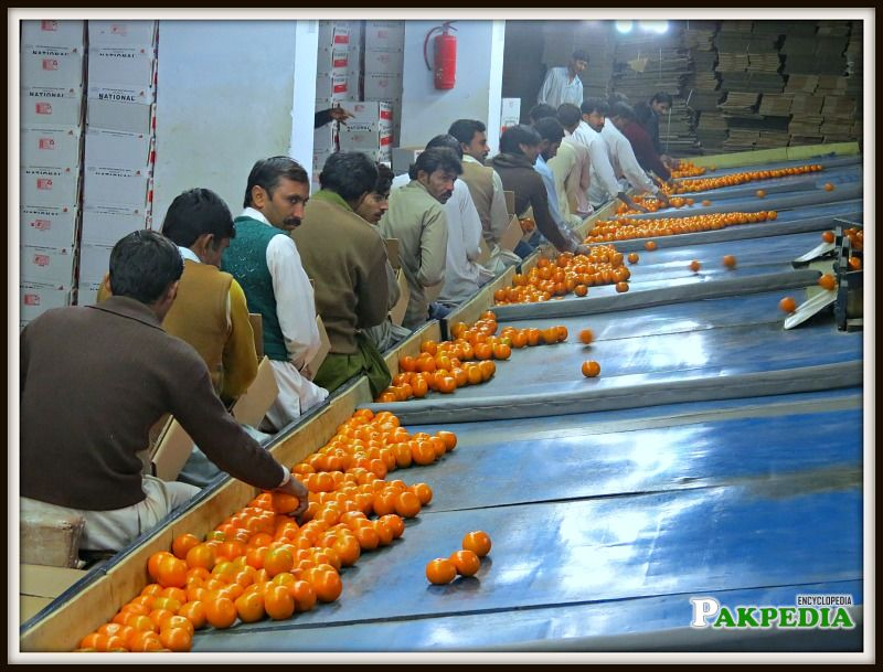 Famous for Production of 'Kinnu'(Orange)