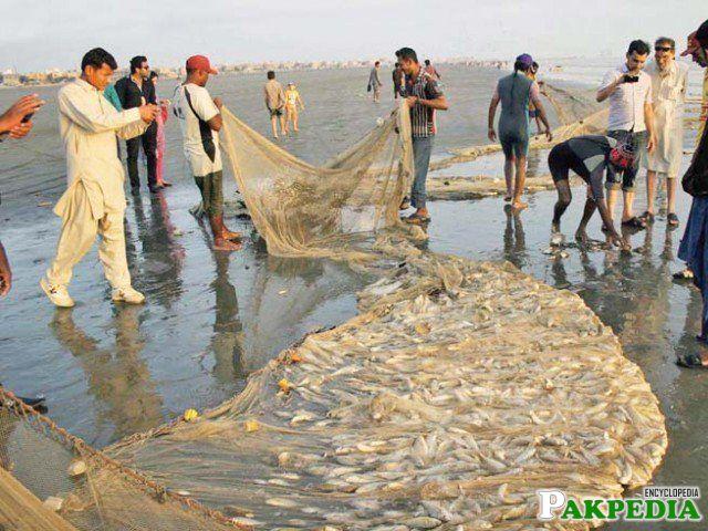 Gwadar Culture