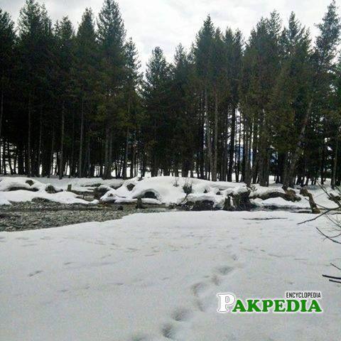 After Snow Fallen