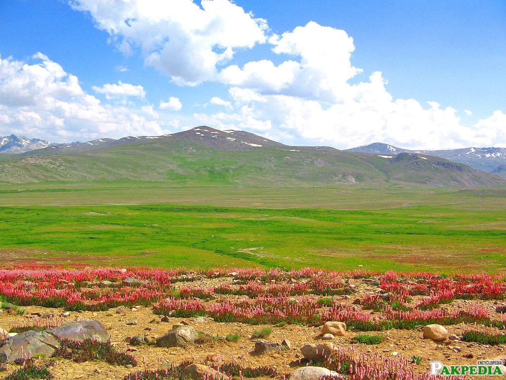 Flora and Fauna of Deosai